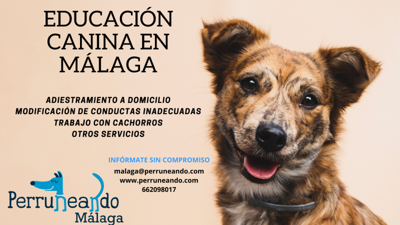 Adiestramiento y Educación Canina en Málaga